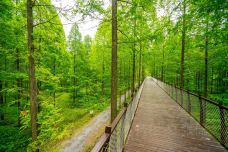 黄海森林公园-东台-doris圈圈
