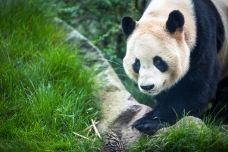 爱丁堡动物园-爱丁堡-doris圈圈