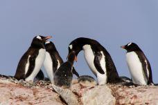 企鹅岛-蓬塔阿雷拉斯-M48****413