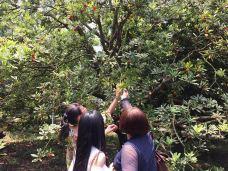 上虞鲜果采摘-上虞区-一个大橙子
