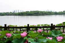 遗爱湖-黄冈-边走边拍的故事