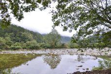 朱鹮自然保护区-洋县-山茶叶蛋糕