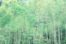 桫椤峡谷-乐山-doris圈圈