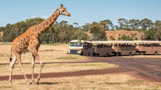 Werribee Open Range Zoo Ticket