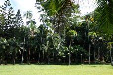 庞普勒斯植物园-毛里求斯-樱木花花道
