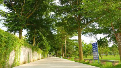 田野生态园 (15)