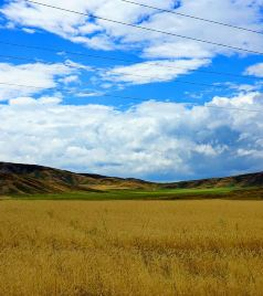 奇姆肯特游记图文-一路行走,一路感受,一路生活 ——纪念自己的第三次哈萨克斯坦之旅