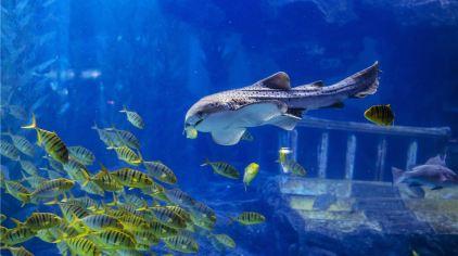 海底世界 (7)