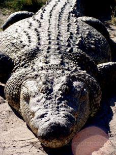 The Crocodile Ranch-奥奇瓦龙戈