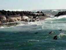 海豹岛-开普敦