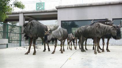 长沙柏乐园 (9)