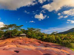 毛里求斯丛林观鸟探险3日游