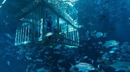迪拜水族馆 (9)