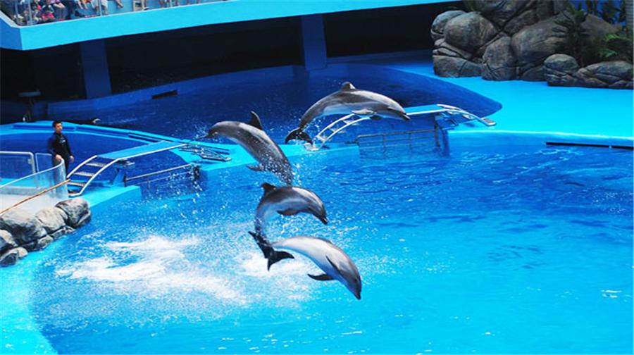 Guizhou Polar Ocean World Admission Ticket