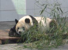 太原动物园-太原-张老师