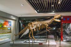 地质博物馆-永城-doris圈圈