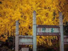 亭林园-昆山