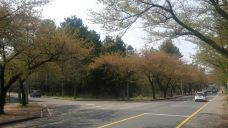 樱花大道-济州岛-320****519