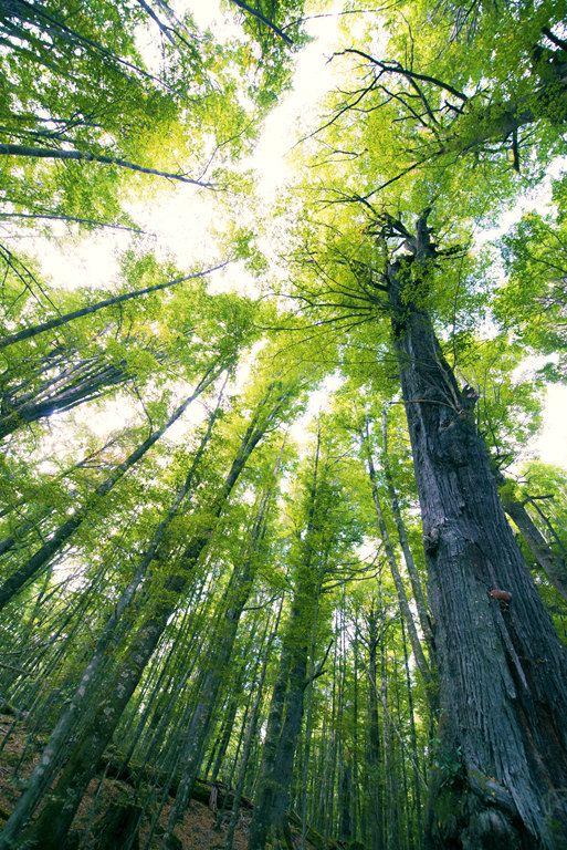 格林諾奇里的魔戒幽暗密林,都是一些參天大樹,宏偉.