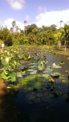 庞普勒斯植物园-毛里求斯-沐雪