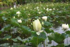 庞普勒斯植物园-毛里求斯-Helen晓世界