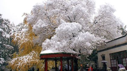 胡克鹏——雪色