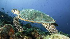 中央格兰德岛潜水体验