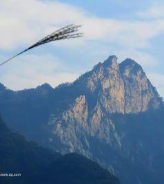 户县游记图文-寻访终南山中的空谷幽兰