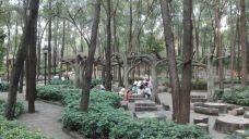 榴花公园-东莞-星随风去