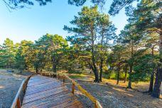 海拉尔国家森林公园-海拉尔区-doris圈圈