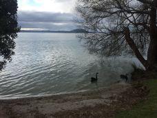 罗托鲁瓦湖-罗托鲁瓦-喜欢跑来跑去的元宝