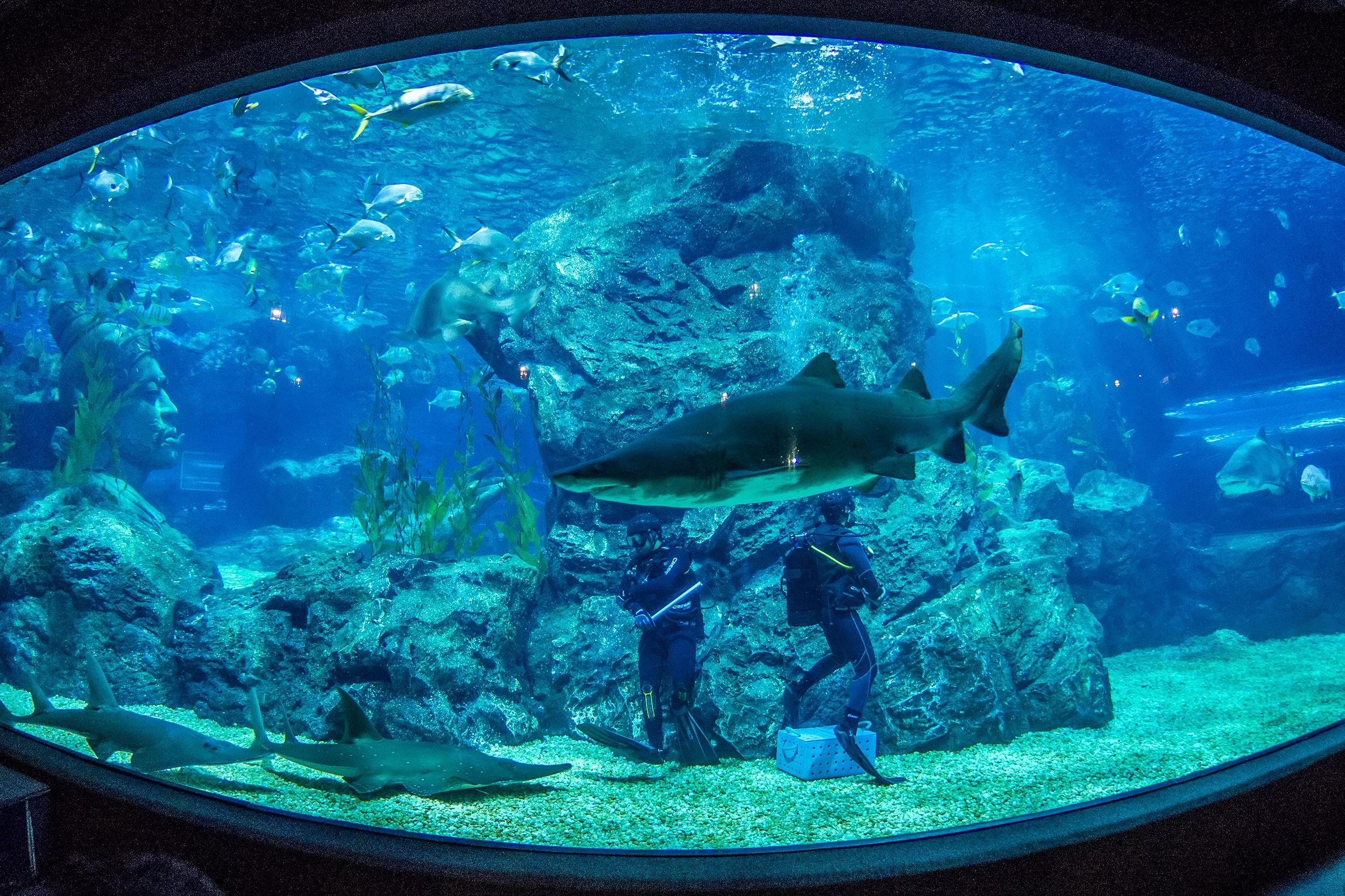 曼谷暹羅海洋世界  Sea Life Bangkok Ocean World   -3