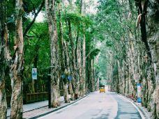 福州国家森林公园-福州-_CFT01****4719115
