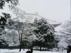 专注奈良赏樱2日游
