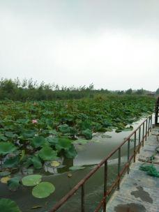 微山湖千岛湿地景区-沛县-奔跑