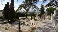 大雅兹公墓-戛纳-南湖花豆椒