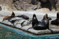 老虎滩海洋公园-大连-一个怎么吃都会胖的胖子