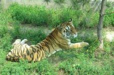 太原动物园-太原-M36****981
