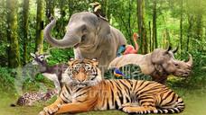 富国岛SAFARI野生动物园