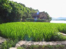 乡村田园-天目湖-koyama喵