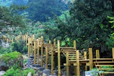 香榧森林公园-诸暨-尊敬的会员