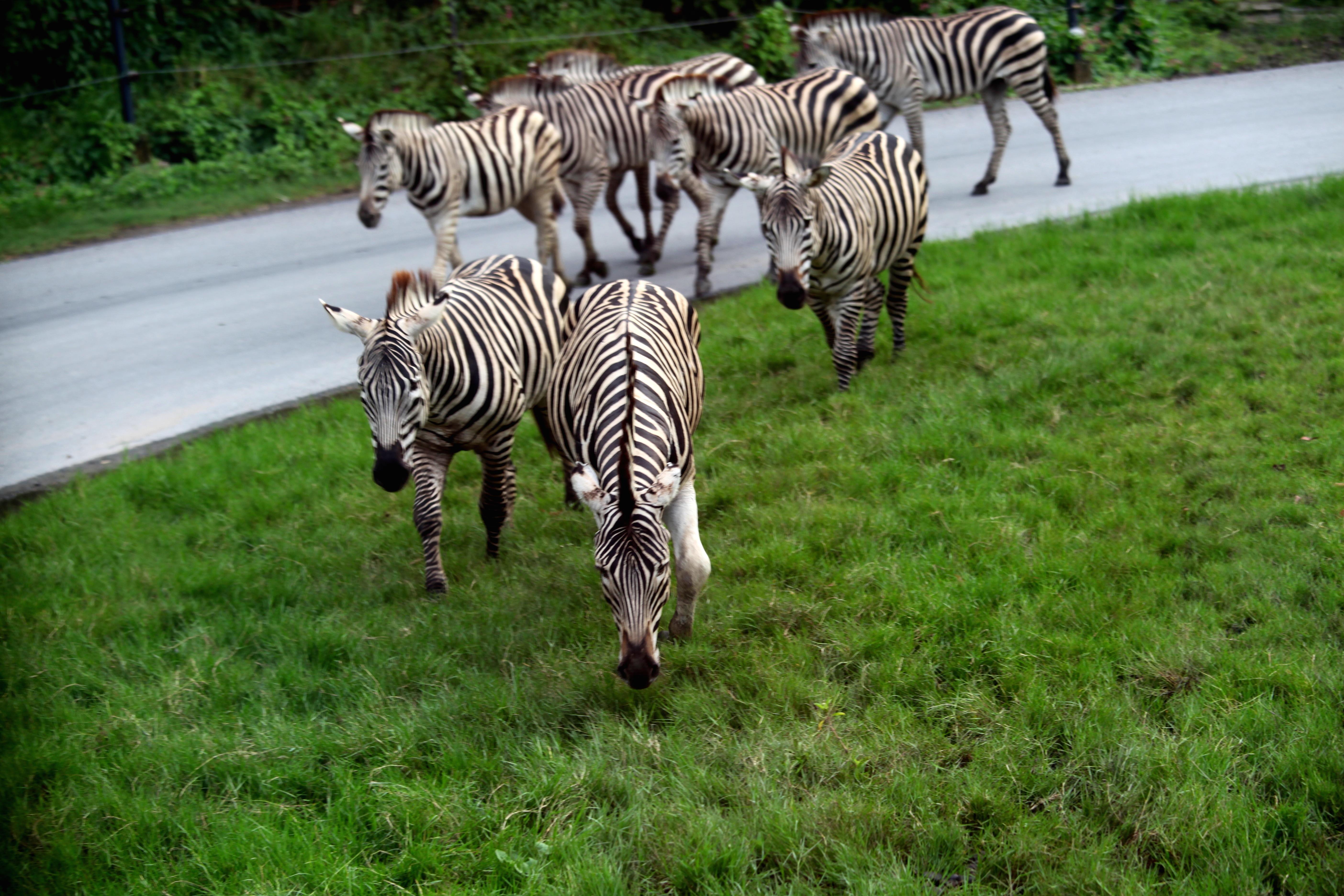 曼谷野生動物世界  Safari World   -1