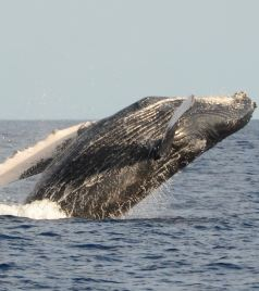 茂宜岛游记图文-愿时光停留在这里—— 夏威夷13日蜜月行(瓦胡+大岛+茂宜岛) 山顶星空+鲸鱼+直升机