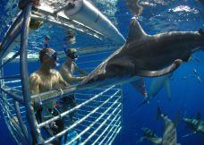 水底鲨鱼观光活动-夏威夷-300****590