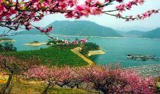 桂花岛(猴岛)-千岛湖-尊敬的会员