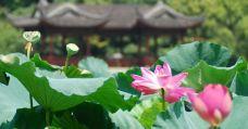 曲院风荷-杭州-m82****25