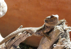 Lawnwood Snake Sanctuary-Greater Plettenberg Bay